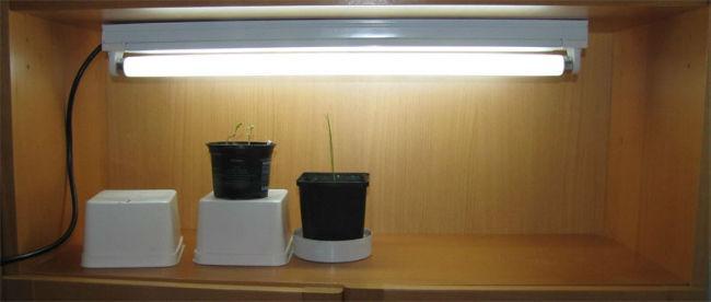 tl groeilamp voor je zaailingen simpel en goedkoop moestuin