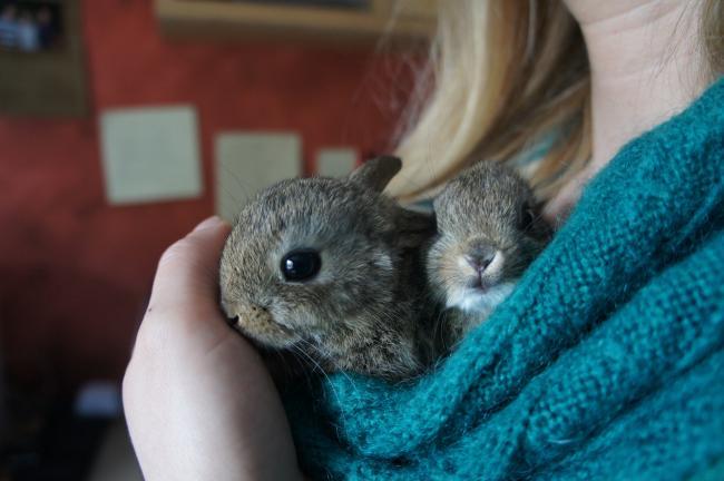 Moestuin forum voor en door moestuin liefhebbers konijnenhok en slamuur - Hoe een vierkante salon te voorzien ...